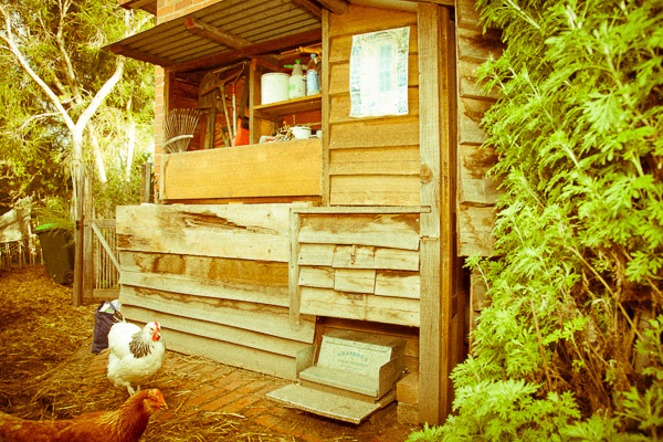 Garden cupboard and chicken house. View of nesting box, feeder and tool area.