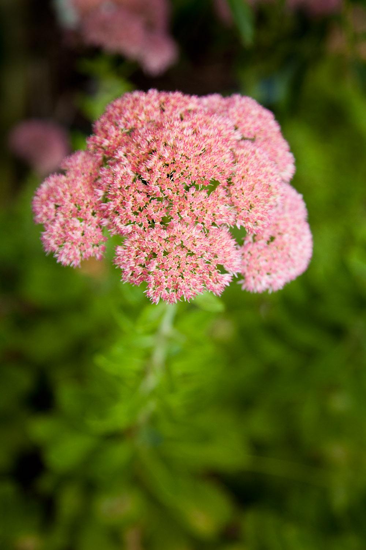 Flower head detail.