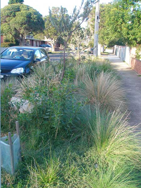 The car is parked on the street and a little path has been created in the middle of the new nature strip.