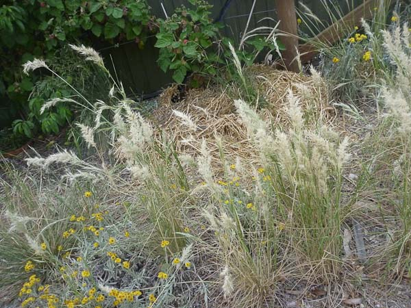 Wallaby grass along the drive way