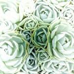 Colour green... I like you!