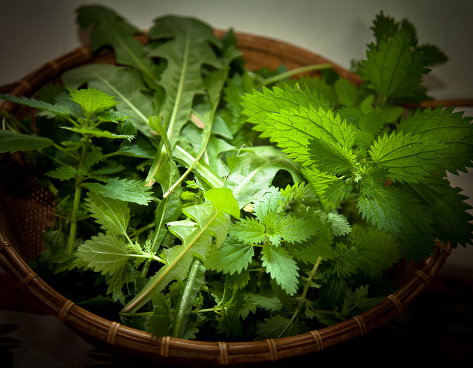 Stinging nettle, dandelion, and parsley from the garden.