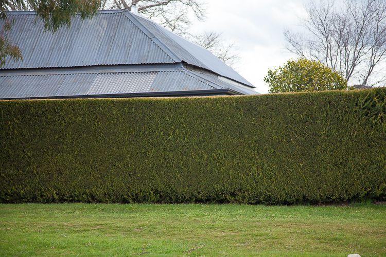 Daylesford Greening-10