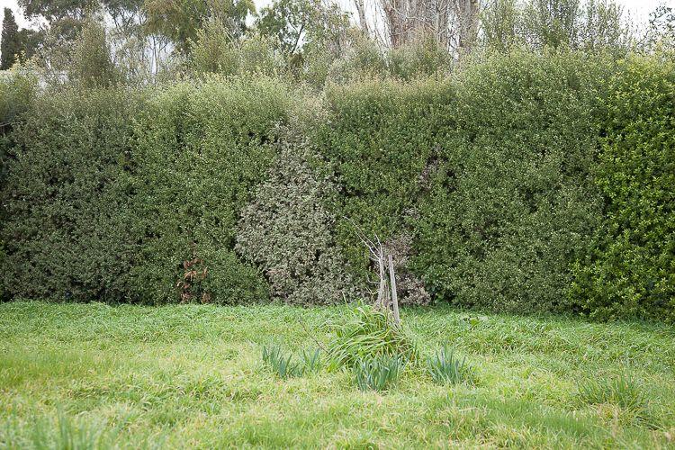 Daylesford Greening-11