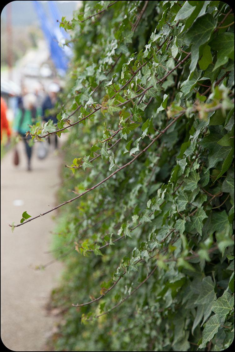 Daylesford Greening-3