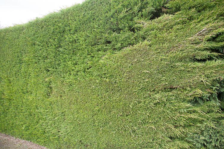 Daylesford Greening-5