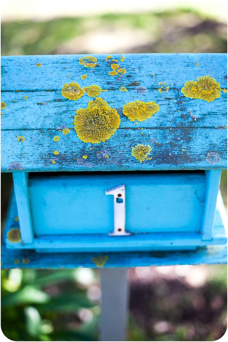 On the way home lichen and blue.