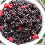 Boysenberry harvest over - pruning can start soon