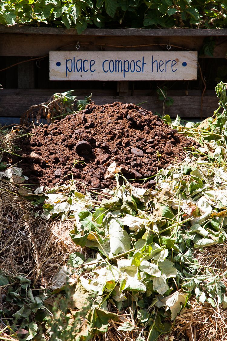 A well cared for compost heap, with lots of coffe grounds.