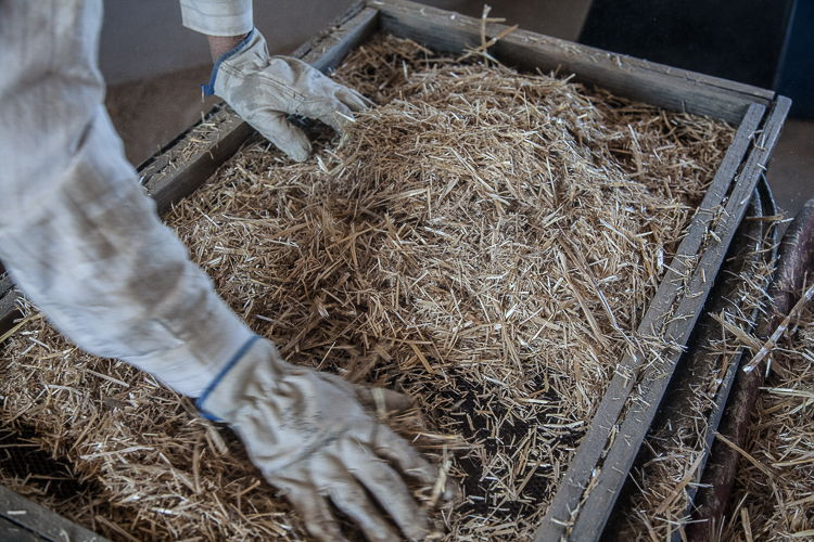 Ralf pushes the straw through a large sieve to allow the finer particles to fall through.