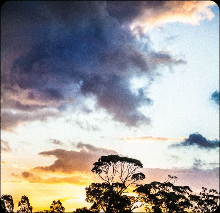 Tree top twilight sky.