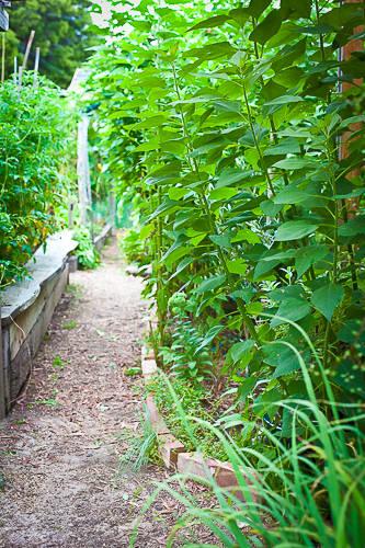 Garden detail. Photo taken during summer months.