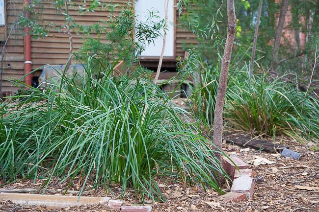 Back native garden detail: photo taken May 2015.