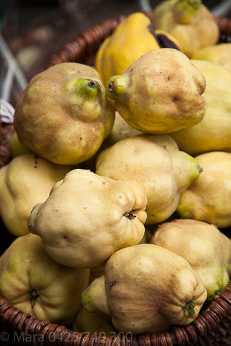 Quince harvest March 2015.
