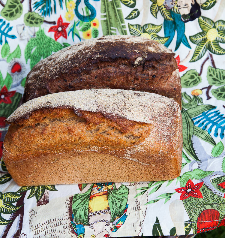 Bread and chestnuts (1 of 1)