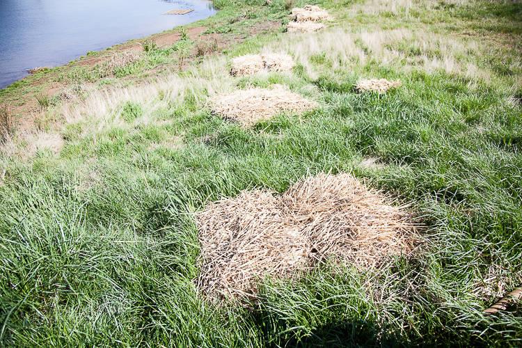 wetland planting (1 of 11)