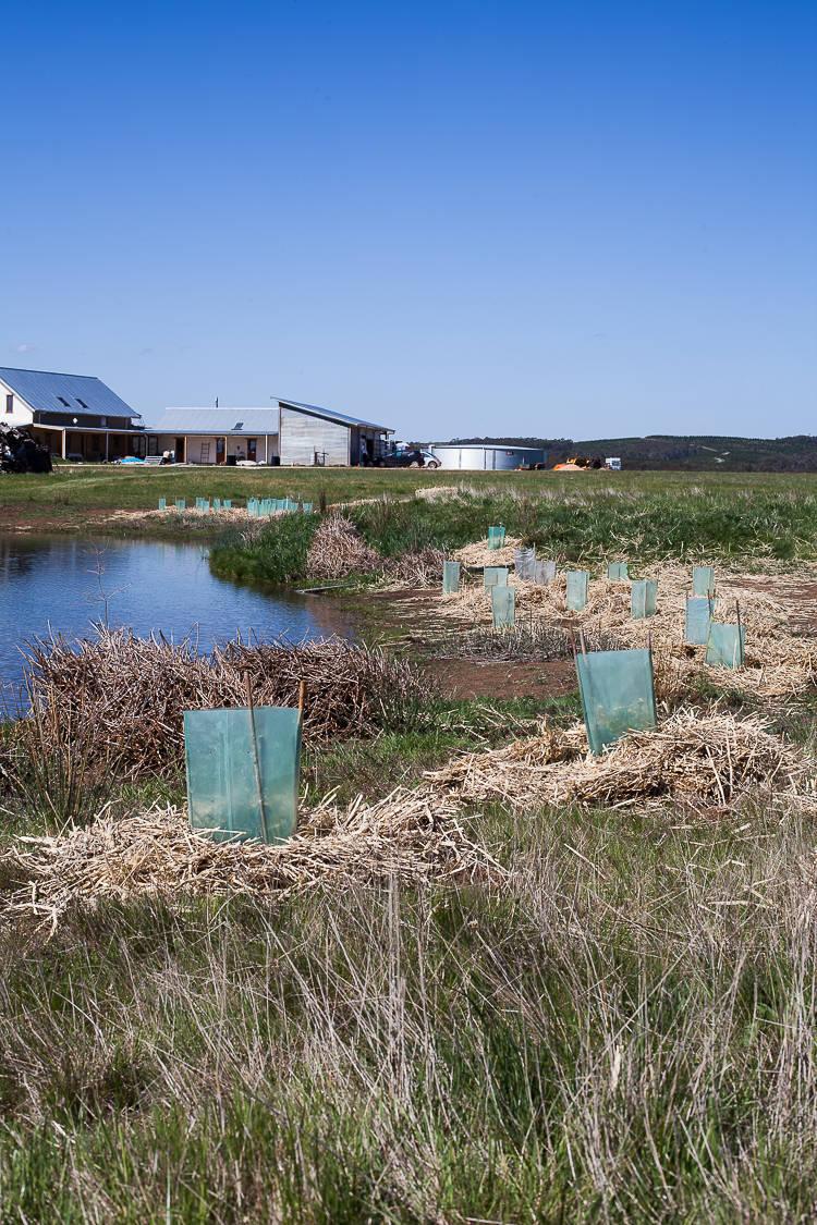 wetland planting (16 of 17)
