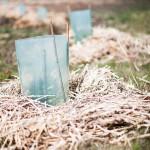 Cinderella dams: biodiverse wetlands