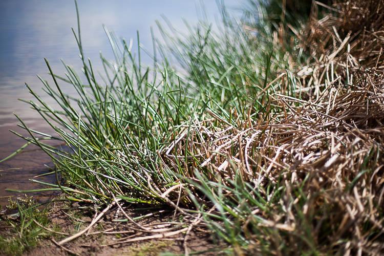 wetland planting (3 of 3)