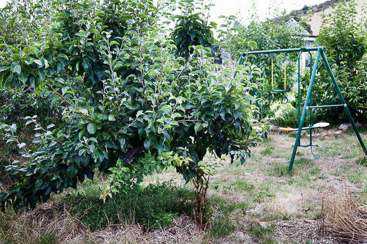 Fruit trees and swings.