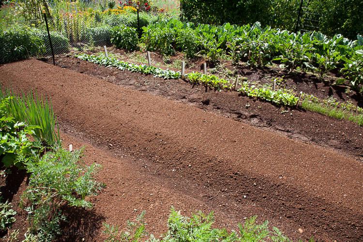Lambley kitchen garden.