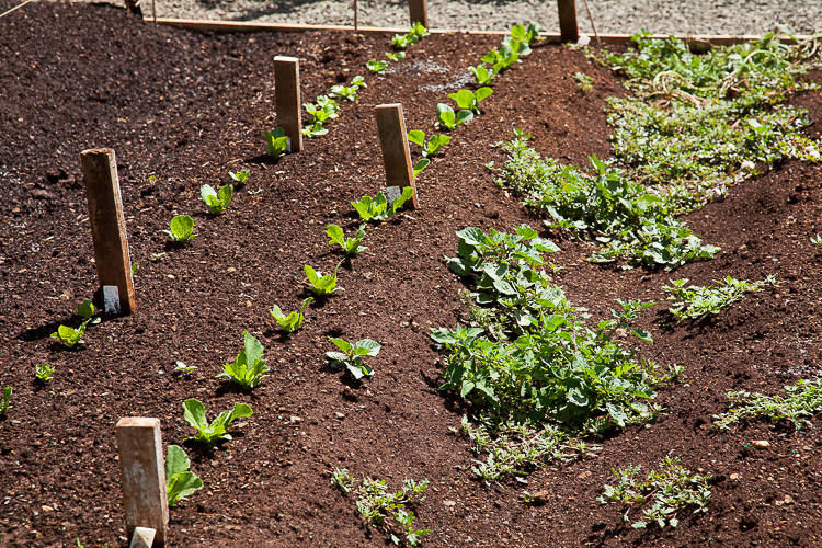 Plant naming tags on soil with perfect tilth!