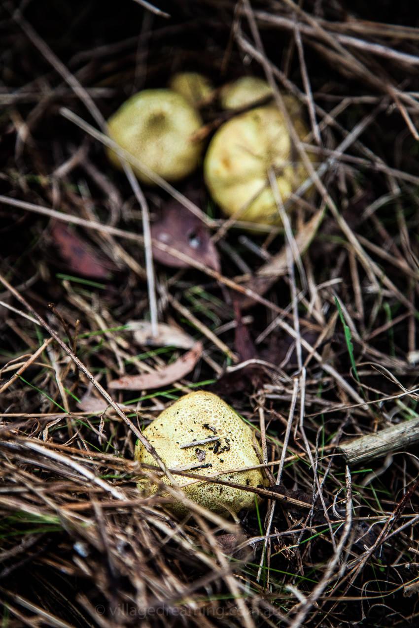 mushrooms (16 of 37)
