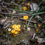 Fungi Language